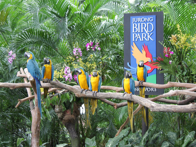 Парк птиц Джуронг в Сингапуре