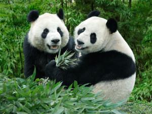 10 мест в Сингапуре, которые нужно посетить любителям животных