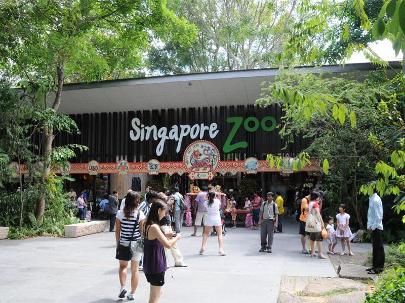 Зоопарк Сингапура - обладатель многочисленных высоких международных наград
