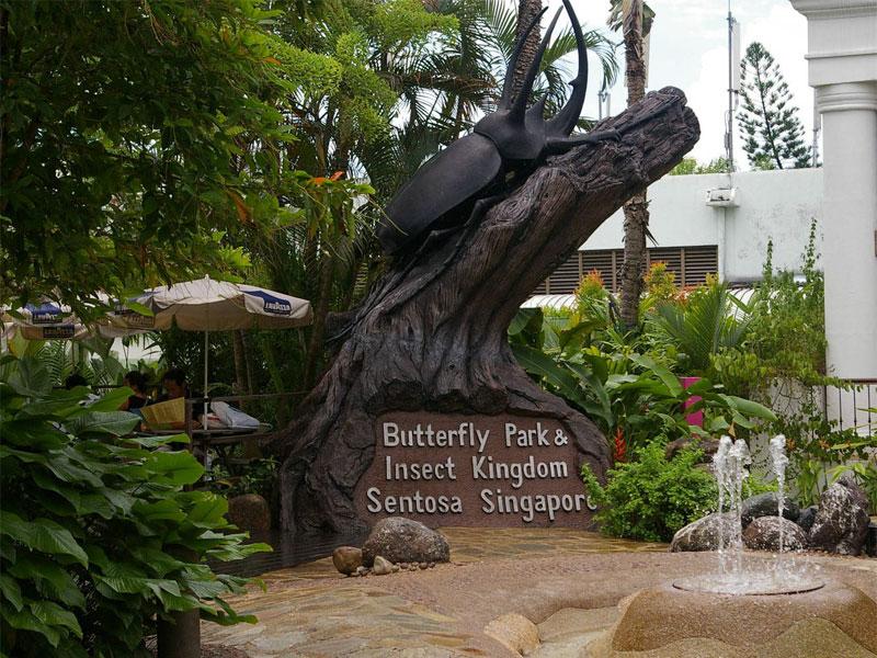 Сингапурский парк бабочек - это настоящее царство гигантских насекомых
