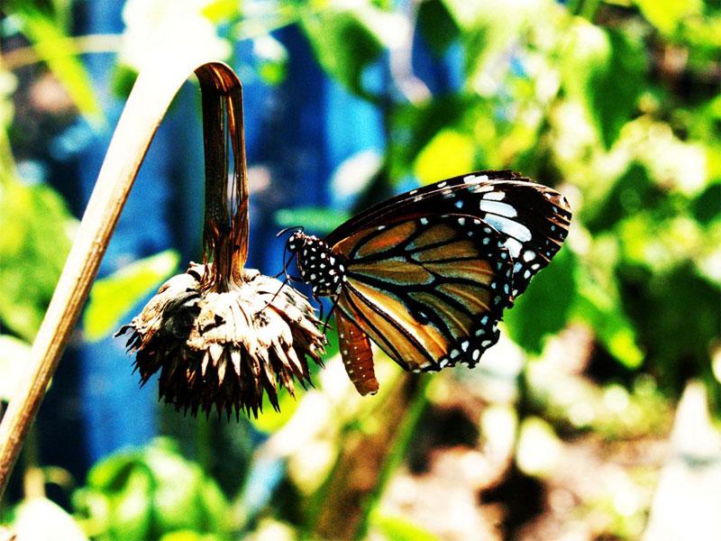 Парк бабочек и Королевство насекомых в Сингапуре