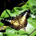 Парк бабочек и Королевство насекомых