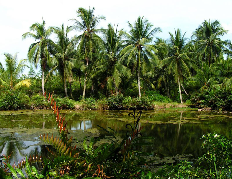 Остров Пулау Убин в Сингапуре