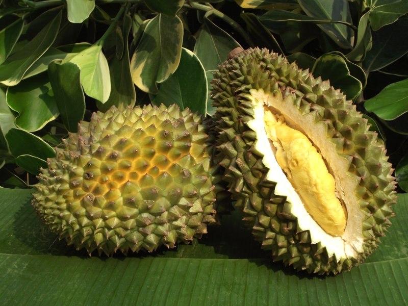 Хотя дуриан выглядит и пахнет весьма необычно, зато он отличается хорошим вкусом